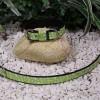 V7. Obojok zelený motýlikový