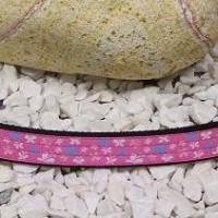VV6. Motýlikové ružové vodítko
