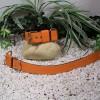 A4. Oranžový obojok s možnosťou vyšitia mena